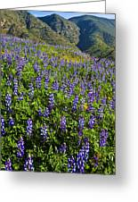 Lupine Hilltop Greeting Card