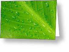 Macro Closeup Of Waterdrops On A Leaf Greeting Card