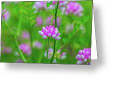 Magenta Wildflower Greeting Card
