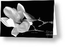 Magnolia In Monochrome Greeting Card