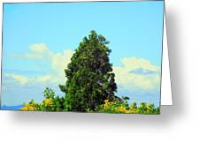 Majestic Evergreen Greeting Card