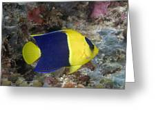 Malaysia Marine Life Greeting Card by Dave Fleetham - Printscapes