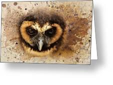 Malaysian Brown Wood Owl Greeting Card