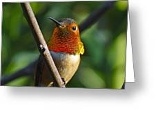 Male Allen's Hummingbird Greeting Card