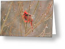 Male Northern Cardinal In Winter Greeting Card