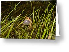 Male Toad Greeting Card