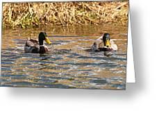 Mallards On Pond Greeting Card