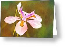 Mama's Iris Greeting Card