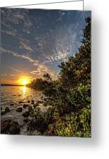 Mangrove Sunrise Greeting Card