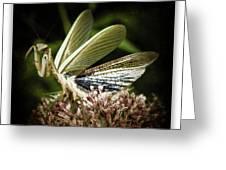 Mantis 22 Greeting Card