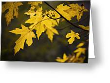 Maple Leafs Of Yellow Greeting Card