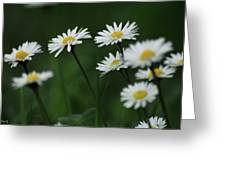 Margherite Greeting Card