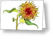 Mari's Sunflower Greeting Card