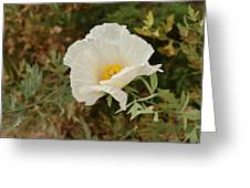 Matilija Poppy I Greeting Card