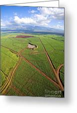 Maui Sugar Cane Greeting Card