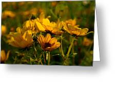 Maximilian Sunflowers Greeting Card