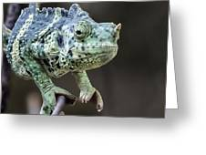 Mellers Chameleon Portrait Greeting Card