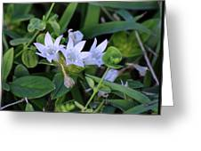 Mexican Clover Greeting Card