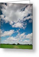 Midwest Corn Field Greeting Card