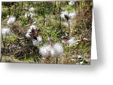 Milkweed Greeting Card