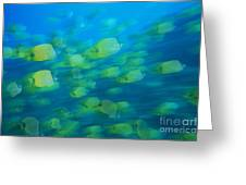 Milletseed Butterflyfish Greeting Card