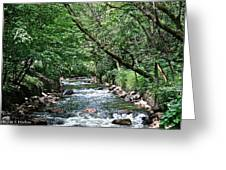Minnehaha Creek Greeting Card