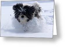 Misty Runs Through The Snow Greeting Card