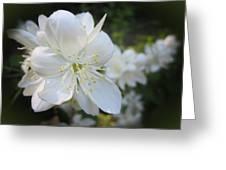 Mock Orange Blossoms Greeting Card