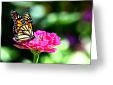 Monarch Butterfly On Pink Flower Greeting Card