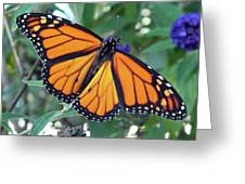 Monarch - Perfection Greeting Card