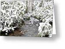 Monongahela National Forest Greeting Card