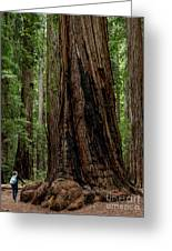 Montgomery Woods State Natural Reserve Greeting Card