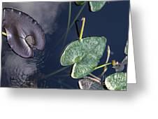 Morikami Gardens Greeting Card