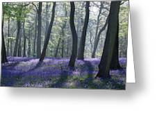 Morning Bluebells Greeting Card