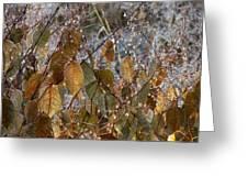 Morning Frozen Greeting Card