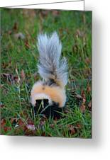 Mostly White Skunk Greeting Card