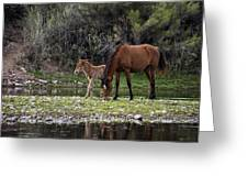 Mother And Foal Wild Salt River Horses Greeting Card