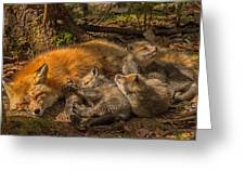 Mother Fox And Her Kits Greeting Card