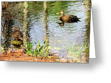 Mottled Duck Pair Greeting Card