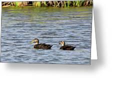Mottled Ducks Greeting Card