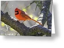 Mr Northern Cardinal Greeting Card