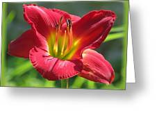 Scarlet Bloom Greeting Card