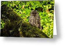 Muir Woods Owl Greeting Card