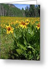 Mule Ear Sunflowers Greeting Card