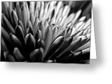 Monochrome Flower Series - Mumz The Word Greeting Card