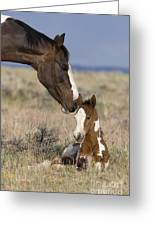 Mustang Mare And Foal Greeting Card