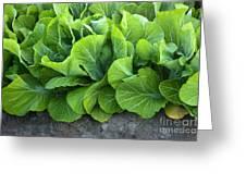 Mustard Greens Greeting Card