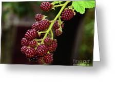 My Blackberries Greeting Card