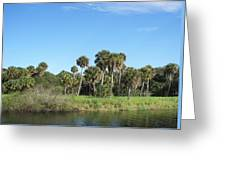 Myakka River Greeting Card