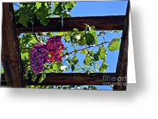 Napa Valley Inglenook Vineyard -2 Greeting Card